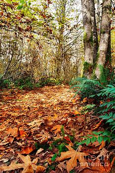 Jo Ann Snover - Leafy trail