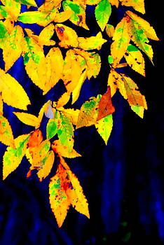 Leaves by Stephen Sherouse