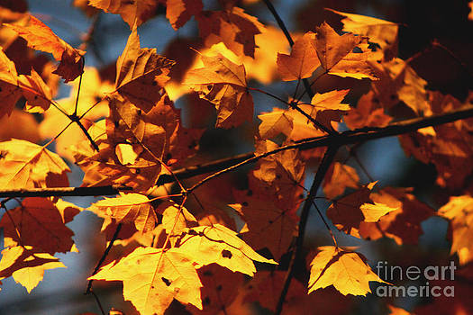 Leaves by Terri JS Molitor