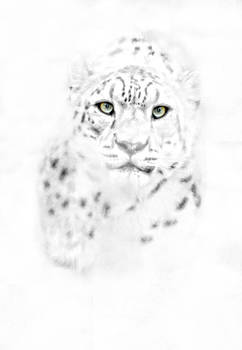 Leopard Eyes by Emily Stauring