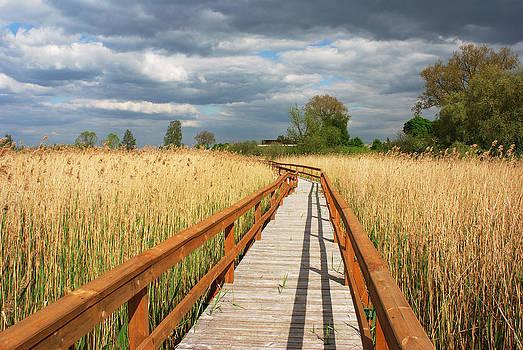 Ramunas Bruzas - Life Path