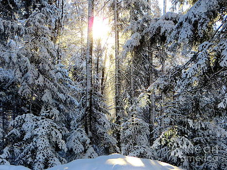 Winter Morning Peace by Jaunine Roberts
