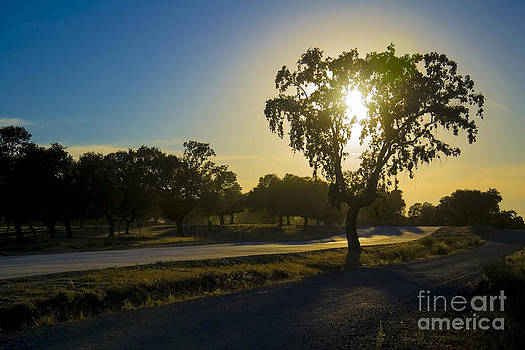 Light Reflections On Holm Oaks. by Stefano Piccini