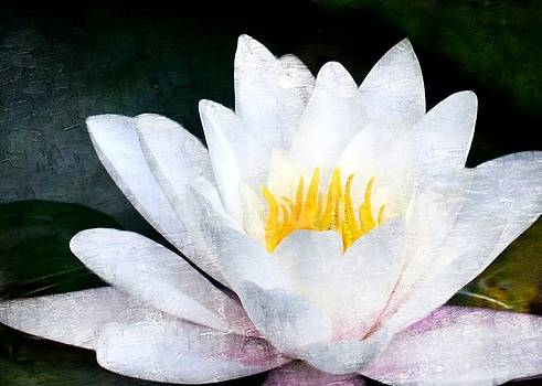 Lily by Kerry Hauser