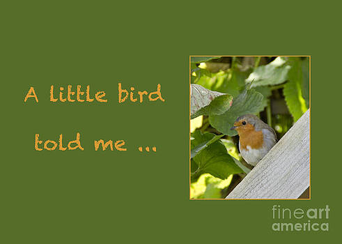 Little Robin by Michelle Orai