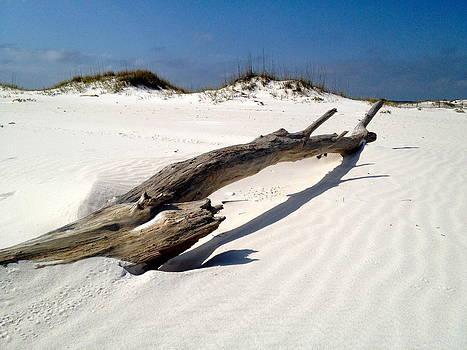 Log on the Beach by Chance Jobe
