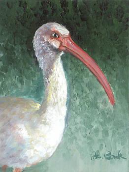 Lone Ibis by Peter Bonk