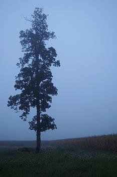 Daniel Kasztelan - Lone Tree