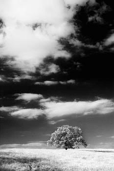 David Taylor - Lone Tree