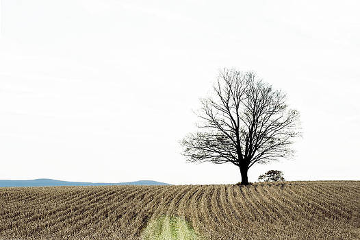 Lone Tree by Ray Summers Photography
