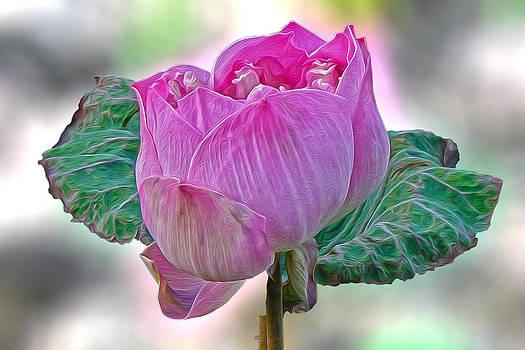 Roy Foos - Lotus Pride