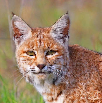 Magical Bobcat by Beth Sargent