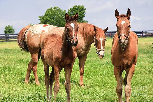 Jill Lang - Mare Horse and Colts