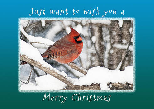 Michael Peychich - Merry Christmas Cardinal