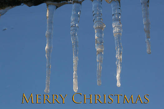 Merry Christmas by David Devine