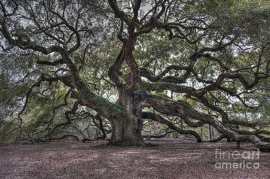 Dale Powell - Mighty Live Oak Tree on James Island