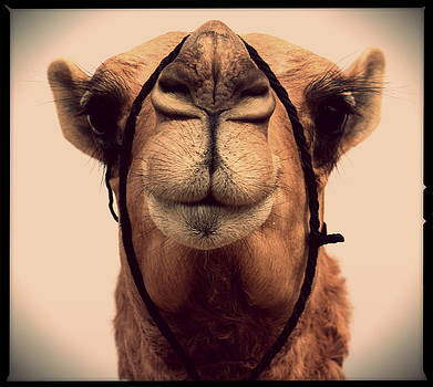 Mumen Khatib - Miss Camels