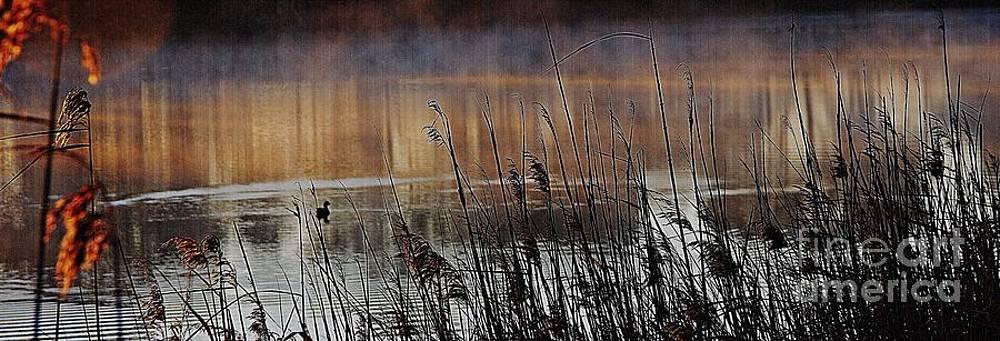 Misty morning by Blair Stuart