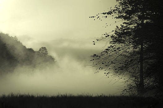 Misty Morning by Cindy Rubin