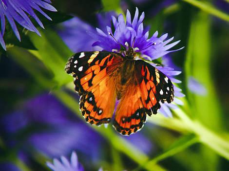 Monarch and Flower by Debra Crank
