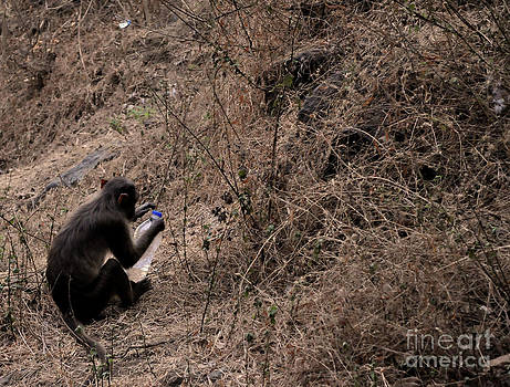 Monkey See Monkey Do by Matthew Naiden