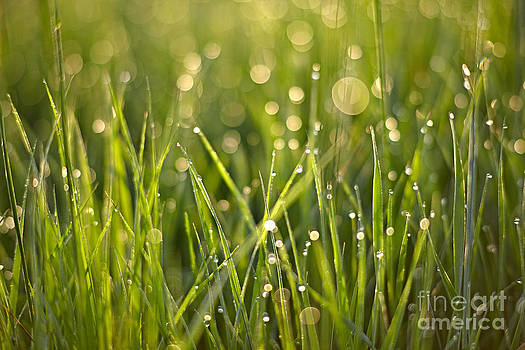 Morning Dew by Bernadett Pusztai