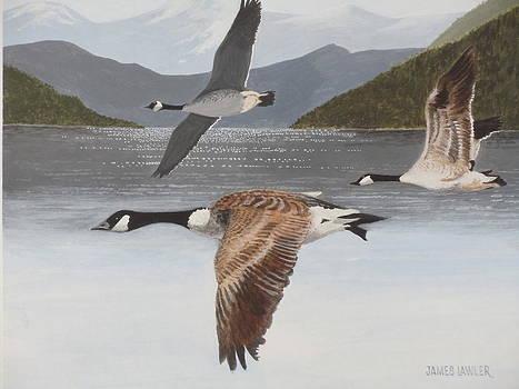 Morning Flight by James Lawler
