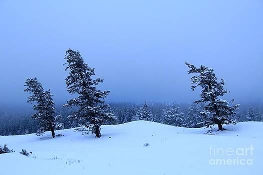 Roland Stanke - morning frost