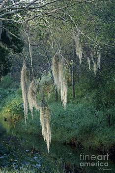 Patricia Twardzik - Moss Hanging Over the River