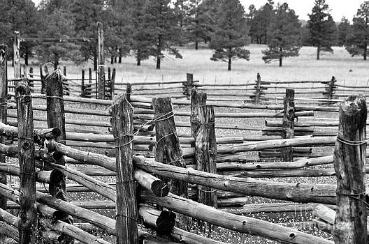 Mountain Corral  by Juls Adams