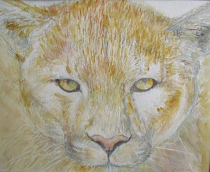 Mountain Lion by Sandra Lytch
