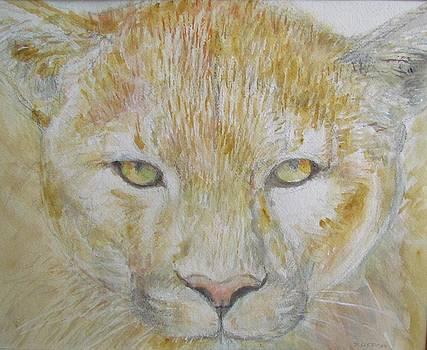 Sandra Lytch - Mountain Lion