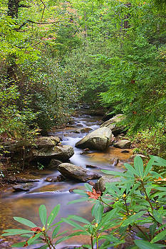 Mountain Stream by David Palmer