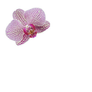 Jan Hagan - Multi color Orchid