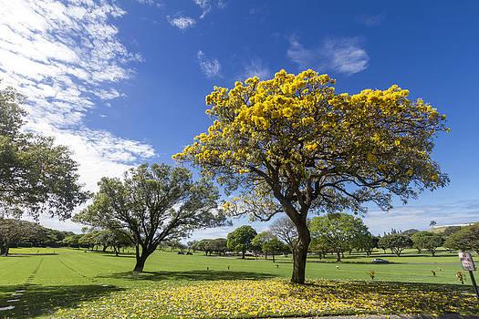 National Memorial Cemetery Honolulu Hawaii by Jianghui Zhang