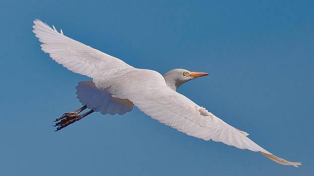 Natural Free and Graceful by Jawaharlal Layachi