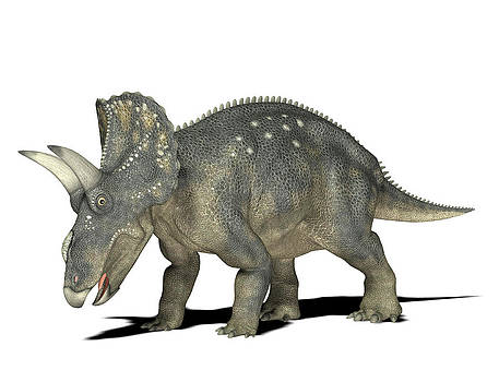 Nedoceratops Dinosaur by Friedrich Saurer