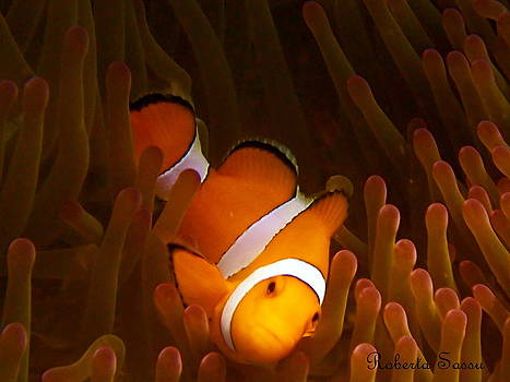 Nemo by Roberta Sassu