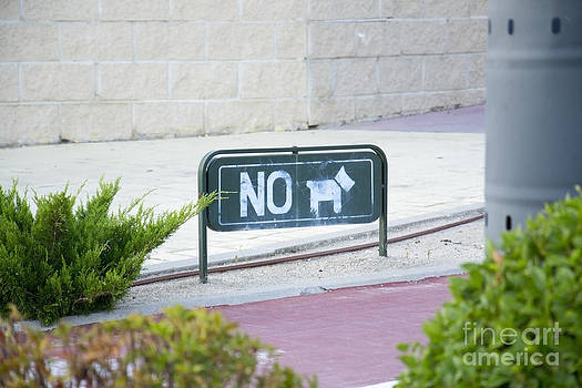 No dog by Stefano Piccini