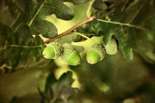 Gynt - Oak Acorns