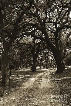 Oaks by Andrew Dobrzanski