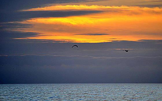 Ocean Sunset by AJ  Schibig