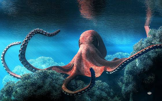 Daniel Eskridge - Octopus