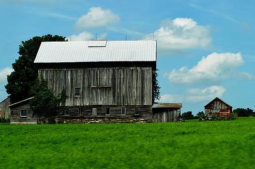 Old Barn by Timothy Thornton