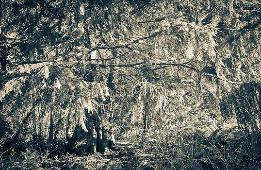 Ronda Broatch - Old Tree