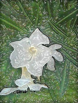 Oleander by William Braddock
