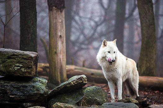 On the Prowl by John Dryzga