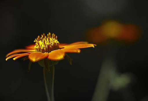 Orange Flower by Bradley R Youngberg