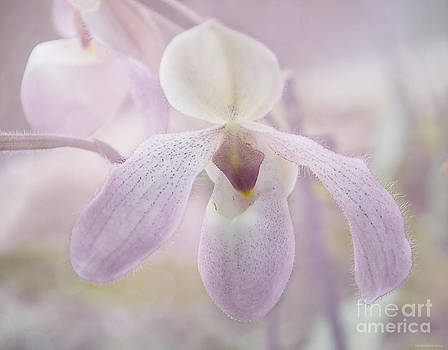 Orchid  by Nicole Markmann Nelson