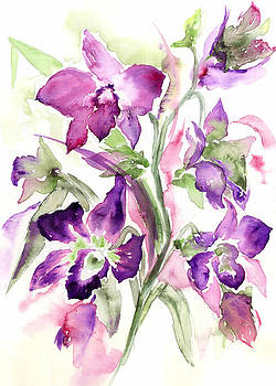Orchids by Nalini Desai